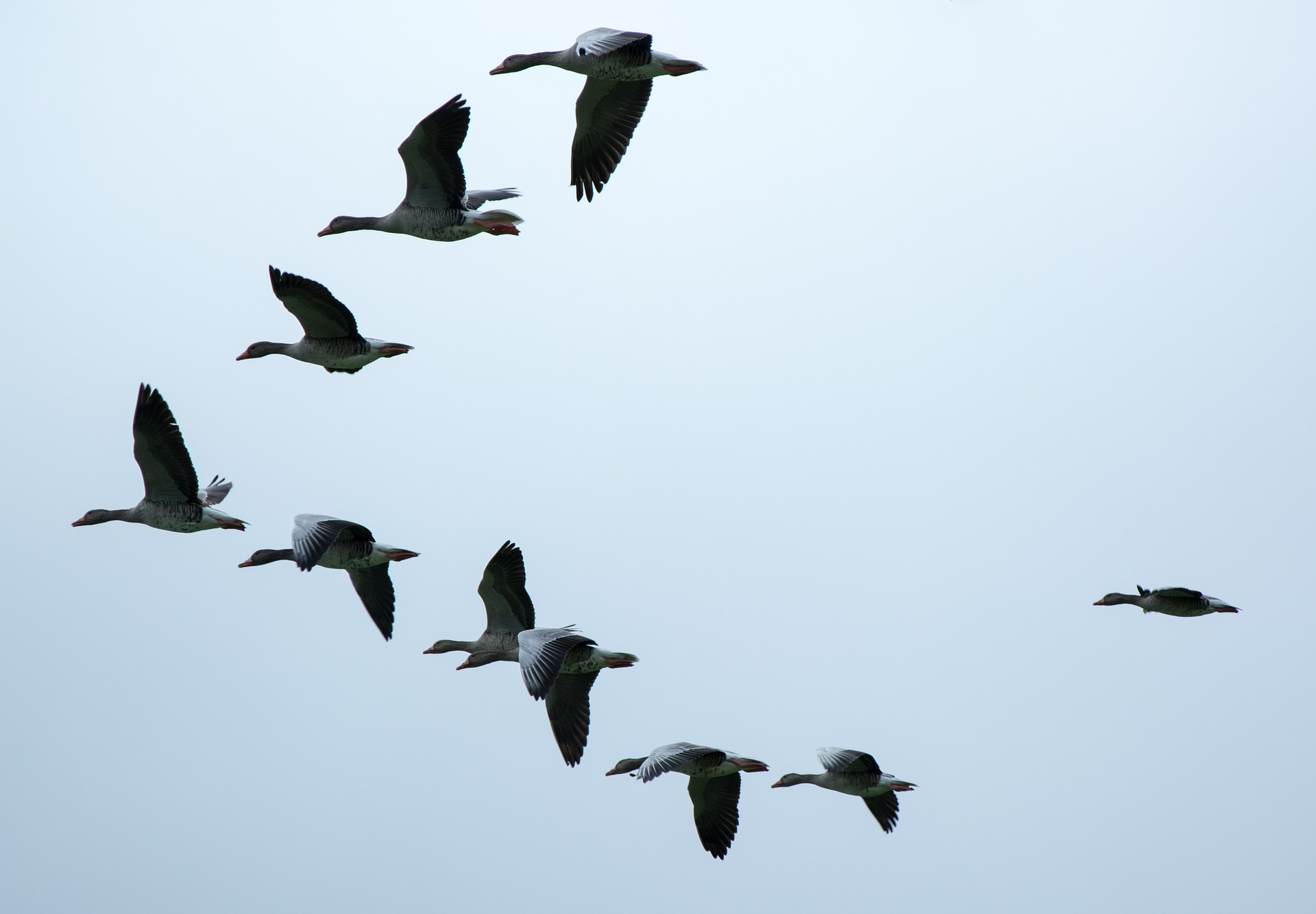 formation-508038_1920